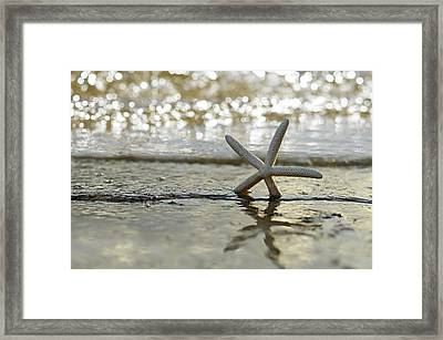 Seaside Frolic Framed Print by Laura Fasulo