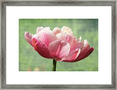 Framed Print featuring the photograph Sending Of Flowers by Trina  Ansel