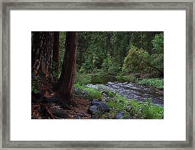 Serene And Beautiful Framed Print by Lynn Bawden