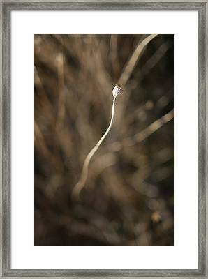 Serpens Framed Print