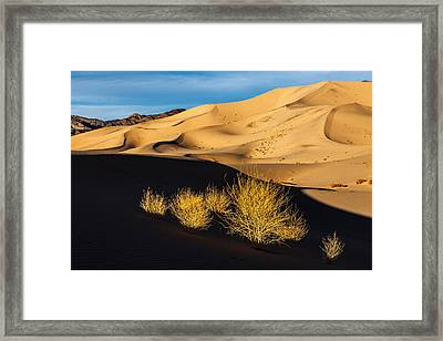 Shadow Play Framed Print by James Marvin Phelps