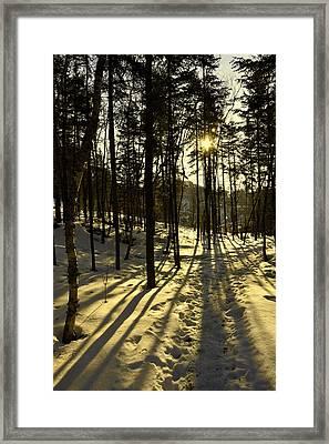 Shadows Framed Print