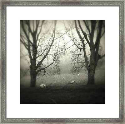 Sheep Framed Print by Les Cunliffe