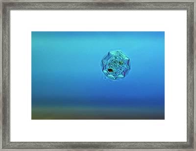 Shelled Amoeba Framed Print