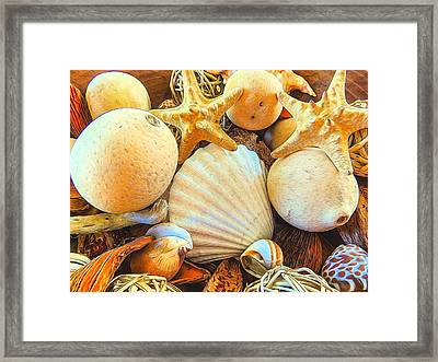 Shells Framed Print by Denise Darby
