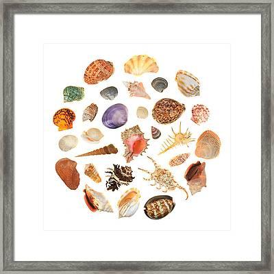 Shells Framed Print