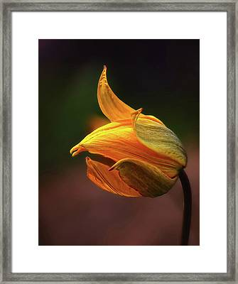 Shine Framed Print by Kent Mathiesen