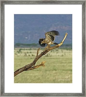 Show Off... Framed Print