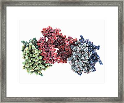 Signal Recognition Particle Domain Framed Print