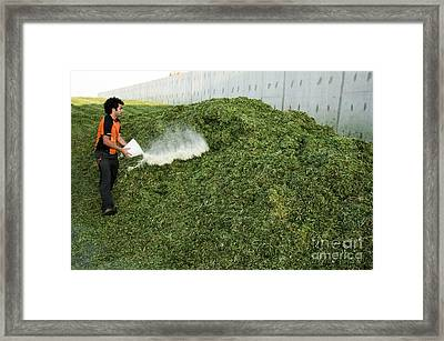 Silage Fermentation Framed Print by PhotoStock-Israel