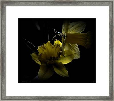 Silent Light Framed Print