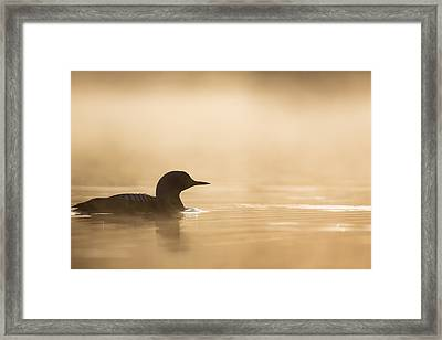 Silhouette In Gold Framed Print by Tim Grams