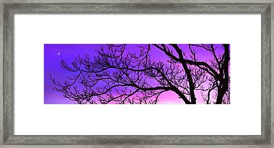 Silhouette Of A Tree At Dusk Framed Print by Panoramic Images