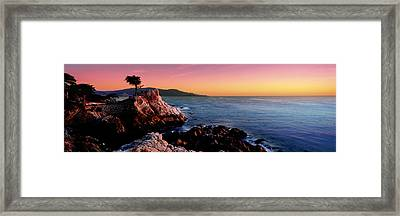 Silhouette Of Lone Cypress Tree Framed Print by Panoramic Images