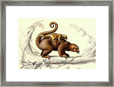 Silky Anteaters Framed Print by Collection Abecasis