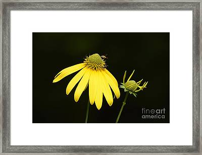 Simple Things Framed Print by Randy Bodkins