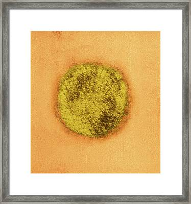 Sin Nombre Virus Particle Framed Print by Ami Images/charles D. Humphrey, Luanne Elliott