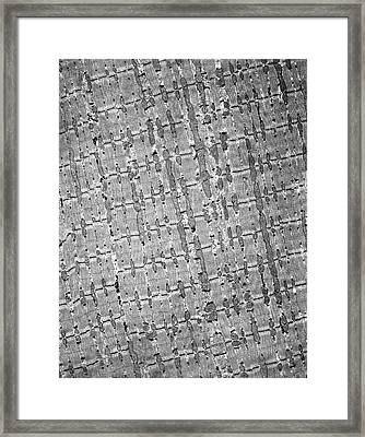 Skeletal Muscle Tissue Framed Print by Microscape