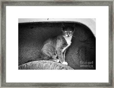 Skitty Framed Print