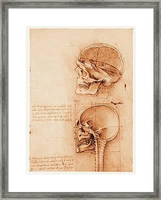 Skull Anatomy Framed Print by Mehau Kulyk