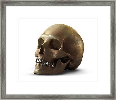 Skull Framed Print by Vitaliy Gladkiy