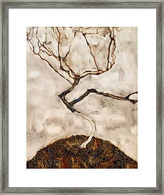 Small Tree In Late Autumn Framed Print by Mountain Dreams