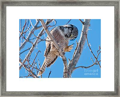 Smiling And Waving Framed Print by Cheryl Baxter