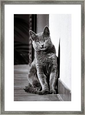 Smiling Cat Framed Print by Tetyana Kokhanets