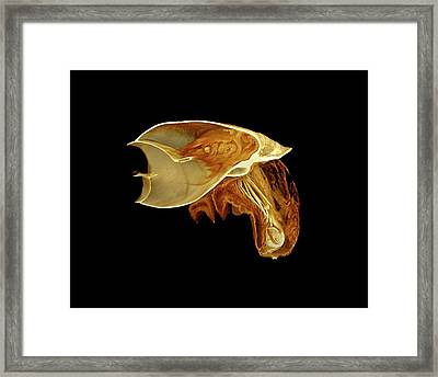 Snail Framed Print by Dan Sykes/natural History Museum, London
