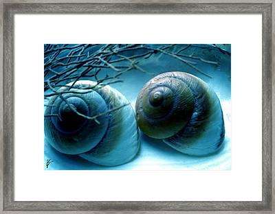 Snail Joy  Framed Print by Colette V Hera  Guggenheim