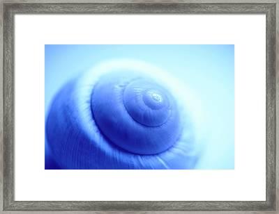 Snail Shell Framed Print by Pasieka