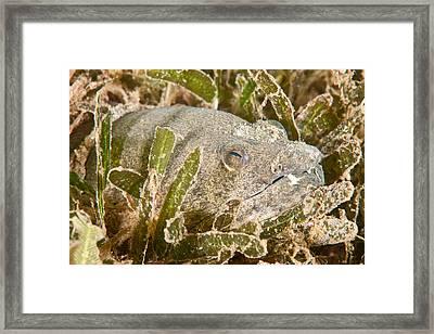 Snapper Eel Framed Print by Andrew J. Martinez