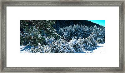 Snow Covered Pine And Fir Trees Framed Print by Panoramic Images