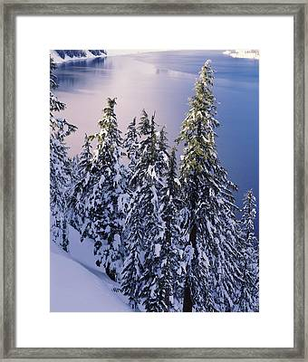 Snow Covered Trees At South Rim, Crater Framed Print