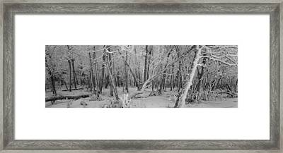 Snow Covered Trees In A Forest Framed Print by Panoramic Images