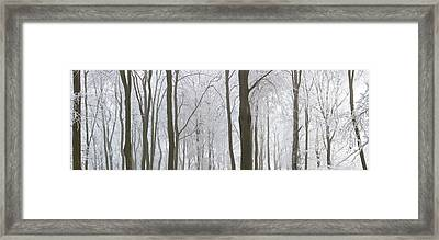 Snow Covered Trees In A Forest, Wotton Framed Print by Panoramic Images