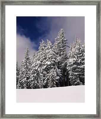 Snow Covered Western Hemlock And Fir Framed Print