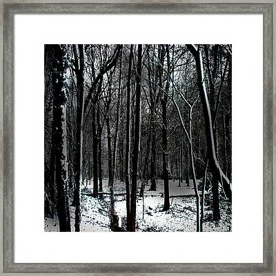 Snow Covered Woodland Framed Print