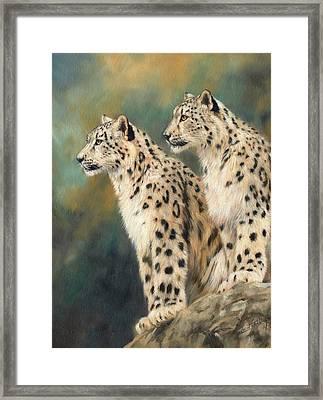 Snow Leopards Framed Print