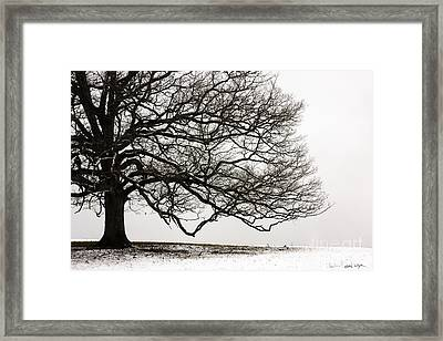 Snow Tree 2010 Framed Print