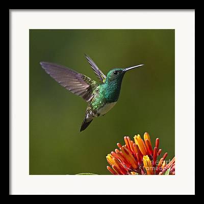 Flying Birds Photographs Framed Prints