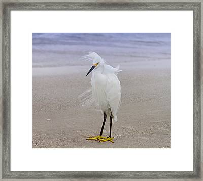 Snowy Egret At The Beach Framed Print