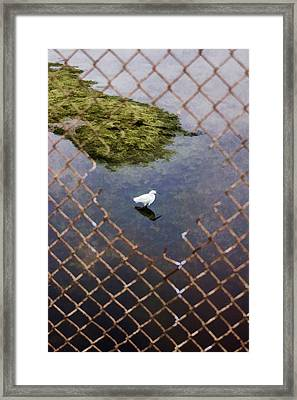 Snowy Egret  Framed Print by Photographic Art by Russel Ray Photos