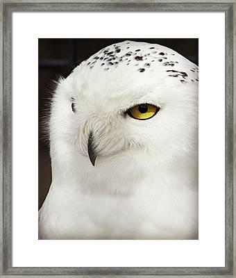 Snowy Owl Framed Print by Carol Toepke
