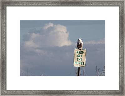 Snowy Owl Hampton Bays New York Framed Print by Bob Savage