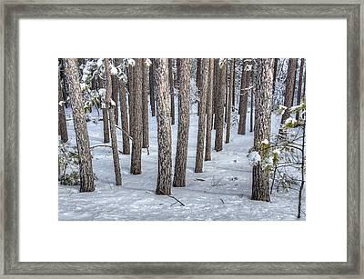 Snowy Woods Framed Print by Donna Doherty
