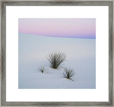 Soaptree Yucca Yucca Elata In Predawn Framed Print by Panoramic Images
