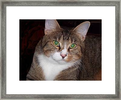 Socks Framed Print by Rosalie Klidies