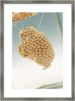 Soft Coral Specimen Framed Print