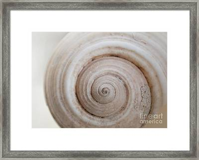 Soft Shell Framed Print